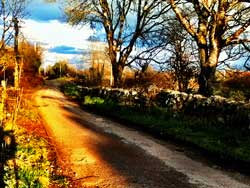 country-lane