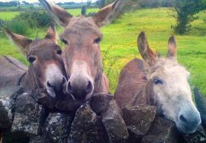 three-donkeys