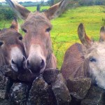 kids stories, three special donkeys from Ballyyahoo